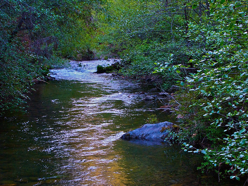 california lake creek landscape jenkinsonlake pollockpines nejmantowicz jenkinsonreservoir