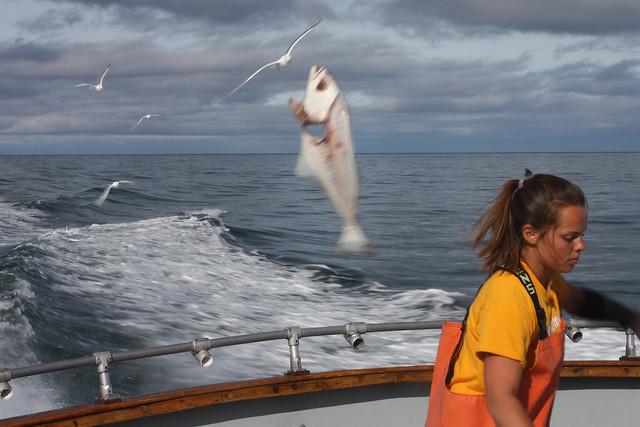 Alaska flying fish 2 flickr photo sharing for Halibut fishing homer