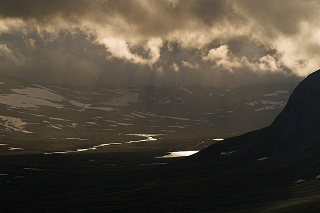 Evening in Dovrefjell