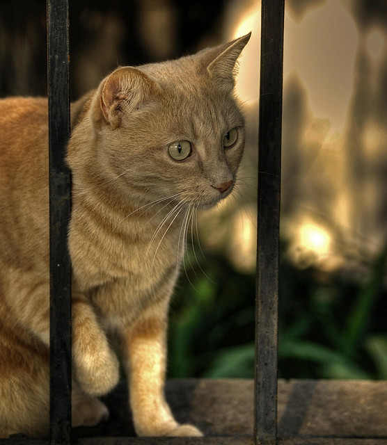 Osservare un gatto è un pò come assistere alla realizzazione di un' opera d'arte . ( Oliver Herford )