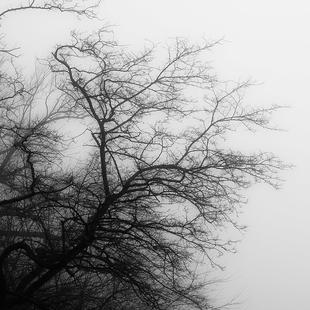 Lakeside Fog 048