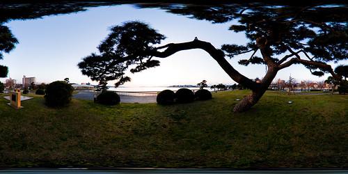 sunset panorama pinetree pine handheld 360x180 matsue lakeshinji equirectangular panotool