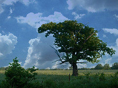 _oil tree copy
