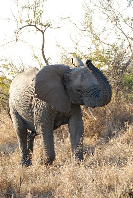 elephants DSC_0141