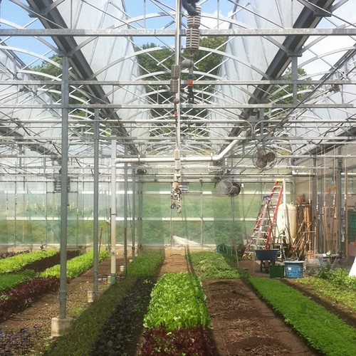 Greenhouse at Blue Hill