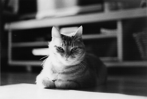 Black & White Film / Cat