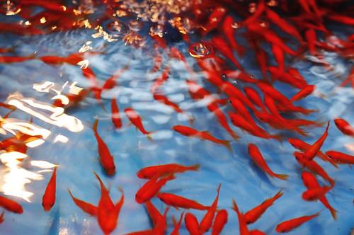 Asagaya Tanabata Festival_16