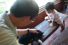 同伴動物具有療癒作用,是人類的朋友。