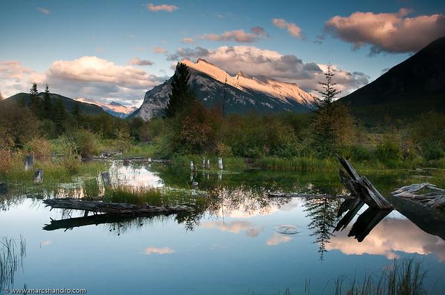 Banff Beaver Pond