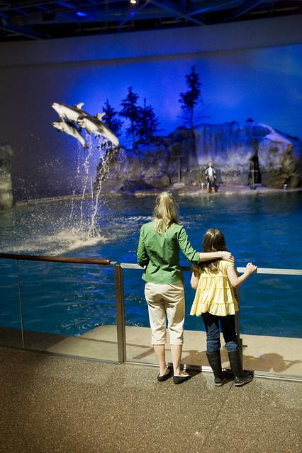 Fantasea At Shedd Aquarium Flickr Photo Sharing