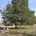 Breda Town Cemetery, Natchitoches, LA