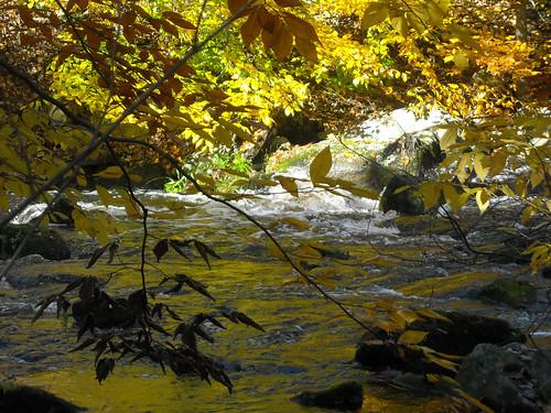 fall fallfoliage foliage october2009 morrisconj njtrails coopergristmillnj blackrivernj