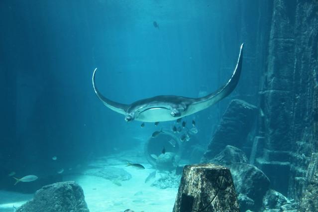Atlantis Aquarium Stingray Flickr Photo Sharing