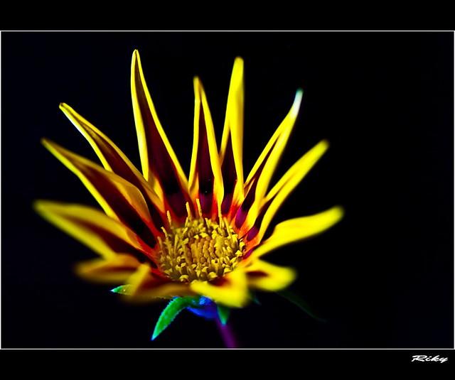 ✿ Flor de Fuego ✿ Fire Flower ✿