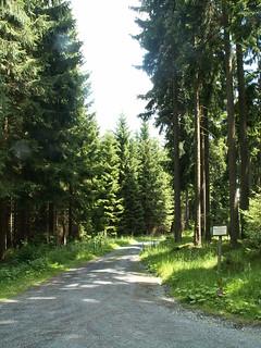 Wandern durch den Vogtland Wald lieb ich für mein Leben 323