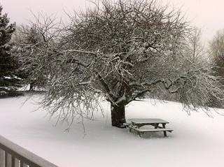 Snow-Covered Tree at DesBarres Manor Inn