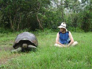 Tortuga Gigante de Galápagos (Geochelone nigra) / Rancho Primicias