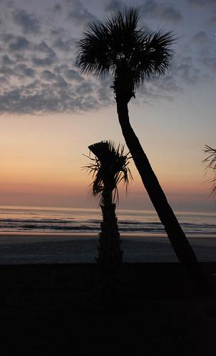 beach sunrise palmtree daytonabeach