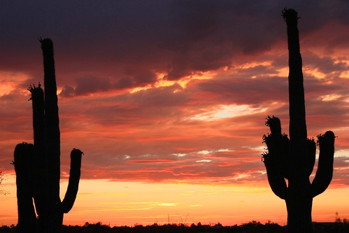 Double Trouble Saguaro Sunset 6.27.2009