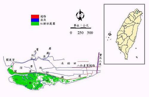 1998年关渡地区红树林分布图