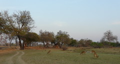 Zambia03SouthLuanga171