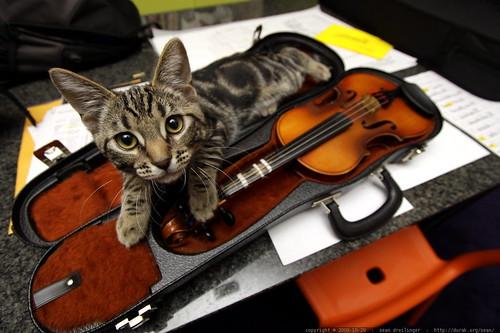 kitten guarding a violin