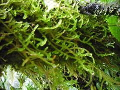 algae(0.0), flower(0.0), branch(0.0), ferns and horsetails(0.0), moss(0.0), vascular plant(1.0), leaf(1.0), plant(1.0), flora(1.0), green(1.0), non-vascular land plant(1.0), vegetation(1.0),