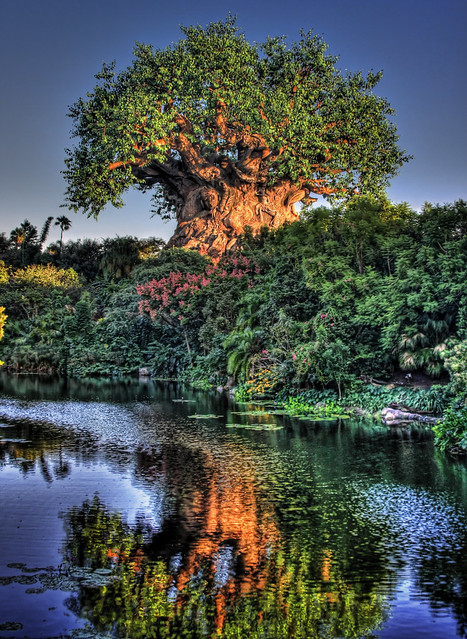 The Tree of Life and Discovery River