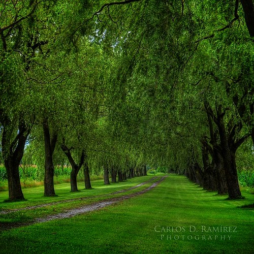 trees summer ontario canada green nikon paradise dancing path explore d5000 platinumheartaward cdr35