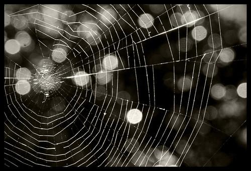 california blackandwhite backyard bokeh spiderweb kitlens cobweb bayarea 18135mm bokehlicious nikond80 happybokehtuesday bokehspots rajeshvijayarajan boekhlicious homeinsanjose rajeshvijayarajanphotography rajeshvj rajeshonflickr