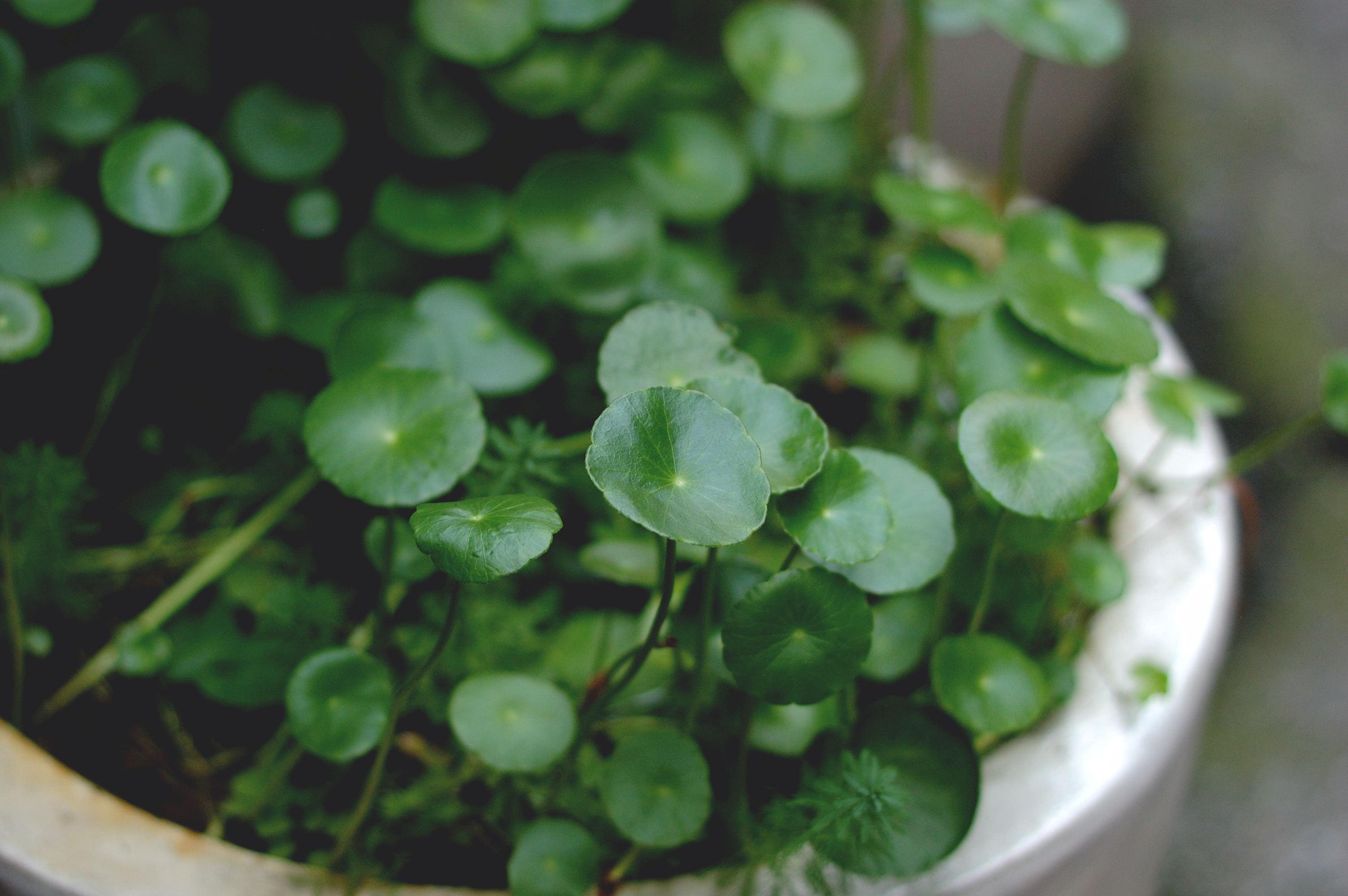 274/365: Little Green Saucers