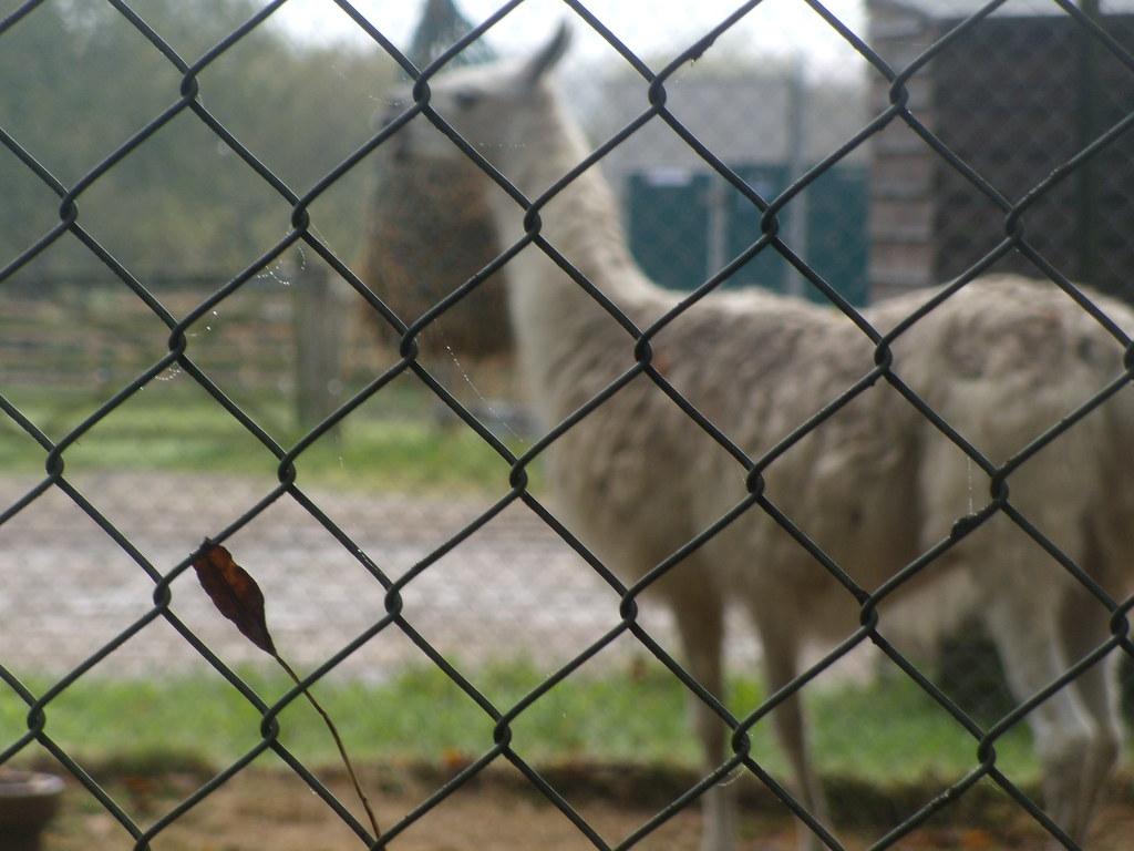 Long necked 'donkey' Nice shot of the fence, anyway. Longwood Donkey Sanctuary. Witley to Haslemere
