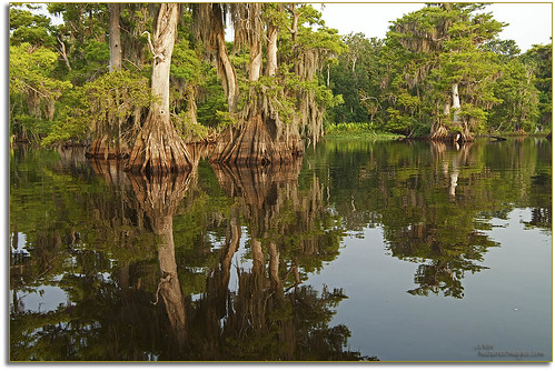 professionalphotographer 1735mm waterscapes oldflorida baldcypresstrees floridaimages photoworkshops phototours bluecypresslake floridalakes phototourguide jmwnaturesimagescom