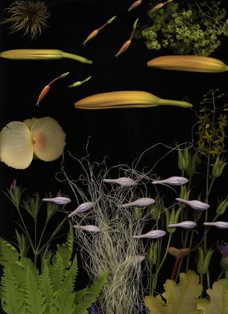 14755 Aquarium