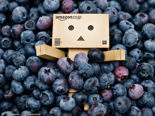 Danbo Buried in Blueberries