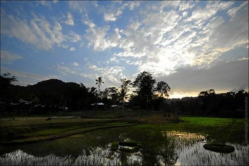 sunset ricefield tanatoraja sigma1020mm ketekesu tongkonan southsulawesi nikond200