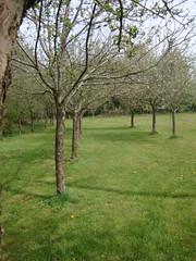 Fruit trees at Kermélinaire