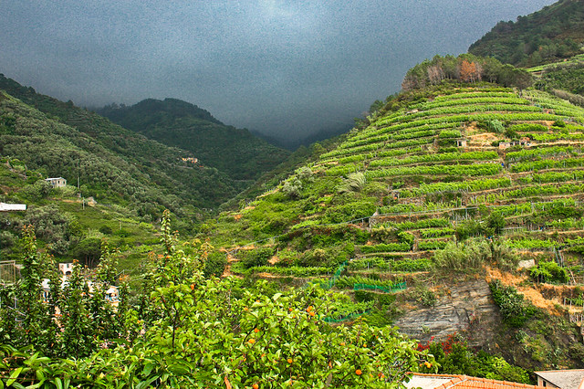 Terrace farming vernazza italy flickr photo sharing for Terrace farming