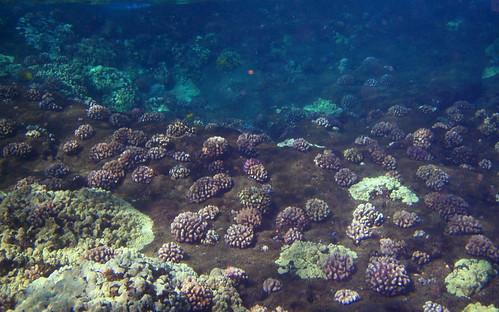Molokini ocean floor