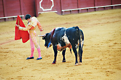 animal sports, cattle-like mammal, bull, tradition, sports, bullring, entertainment, cattle, matador, performance, bullfighting,
