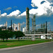 CoNoCo pHiLLiPs pLaNt by sherrYgibsoN~here & there...