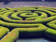 shrub, garden, maze, labyrinth, green,