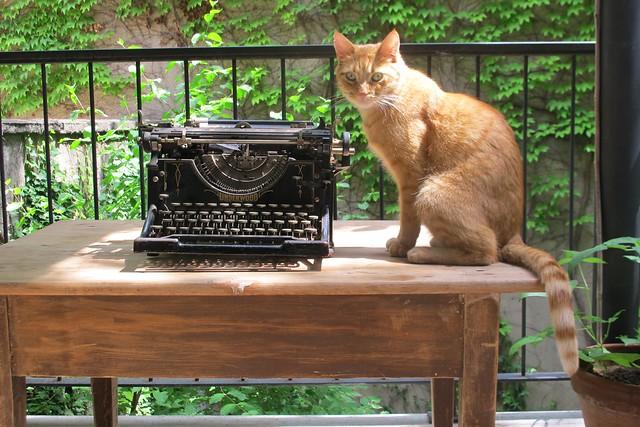 Underwood & Cat
