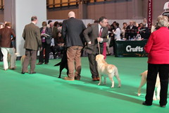 crofts day 4 sporting breeds