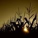 Harvest by ICT_photo