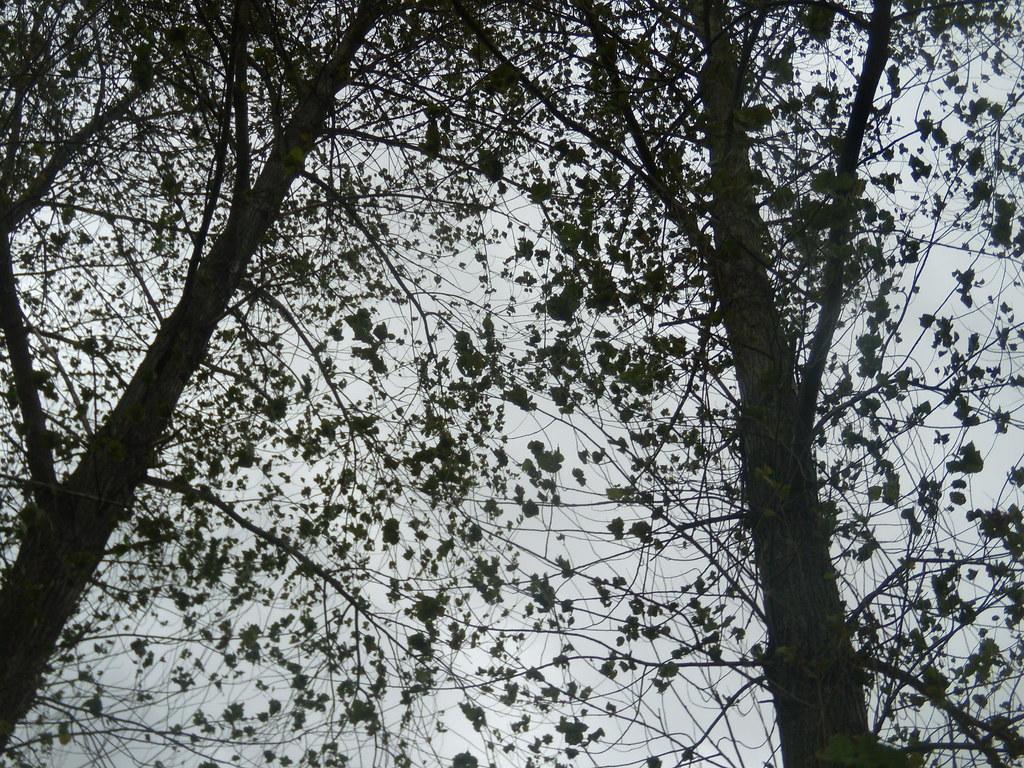 Looking up Wye Circular