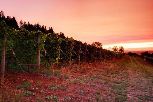 trees sky sun sunrise canon eos vineyard vines wine vine winery rows grapes rise 1022mm hdr highdynamicrange stoller 40d