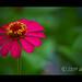 Flower por Uriel Akira