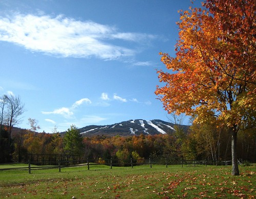 fall leaves vermont foliage killington greenmountains