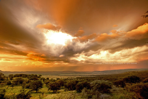 Serengeti | Sundowners